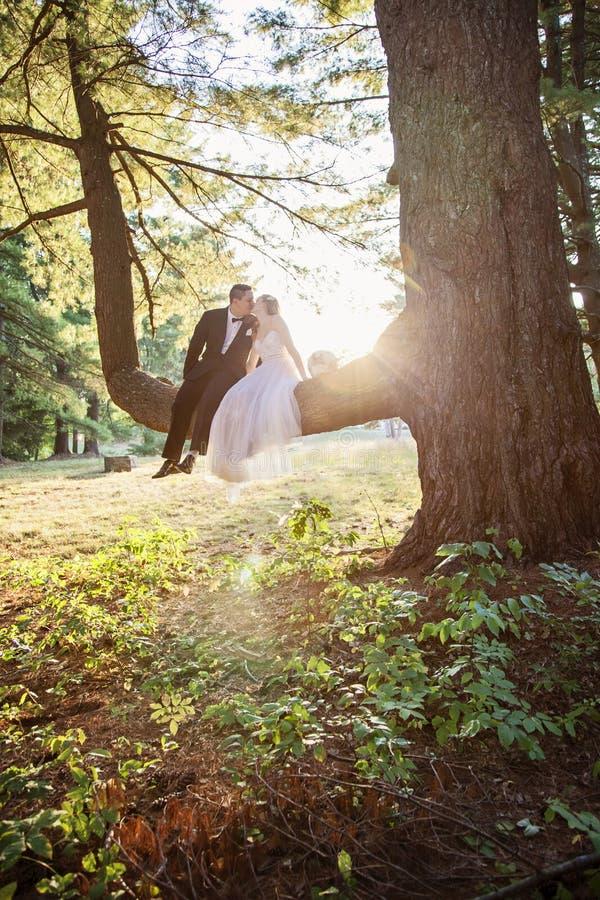 Brud- och brudgumsammanträde, i att kyssa för träd royaltyfri fotografi