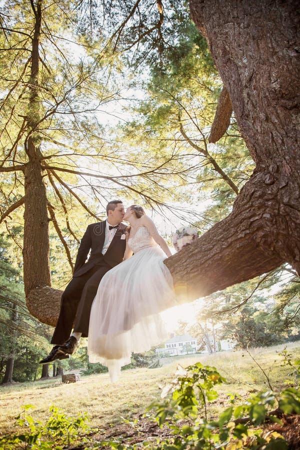 Brud- och brudgumsammanträde, i att kyssa för träd royaltyfria bilder