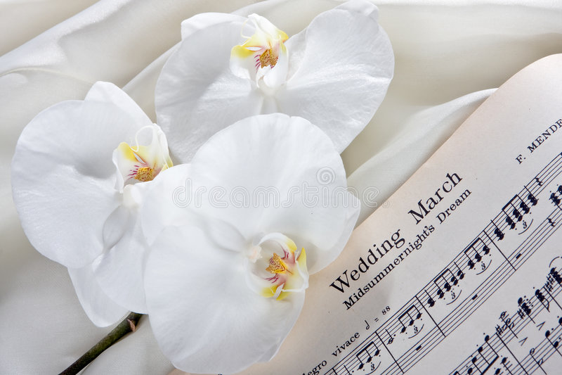 brud- orchids royaltyfri fotografi