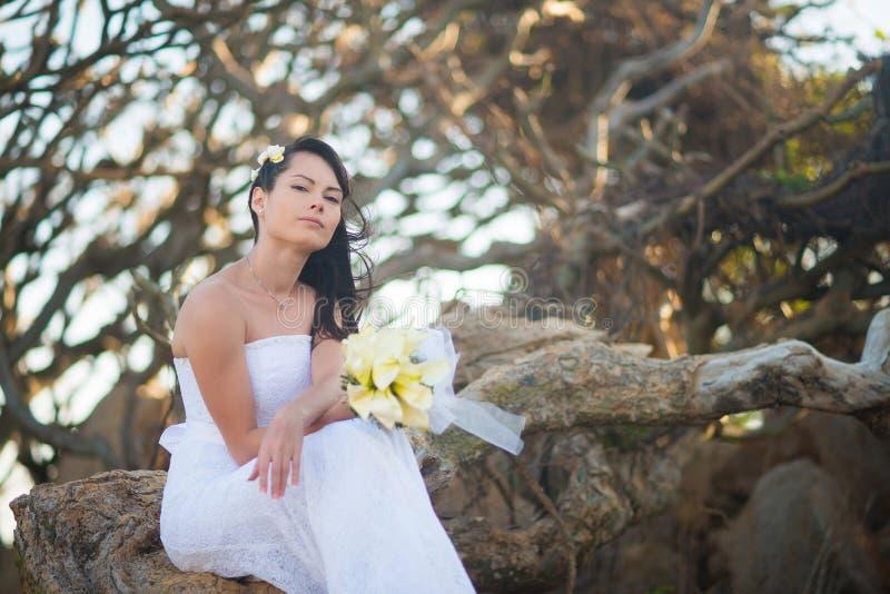 Bruden i bröllopsklänningen sitter på rotar av ett träd i mitt av stenarna på bakgrunden av tropiska träd royaltyfri fotografi
