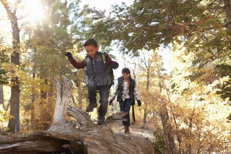 Bruder und Schwester, die entlang einen gefallenen Baum in einem Wald gehen lizenzfreies stockfoto