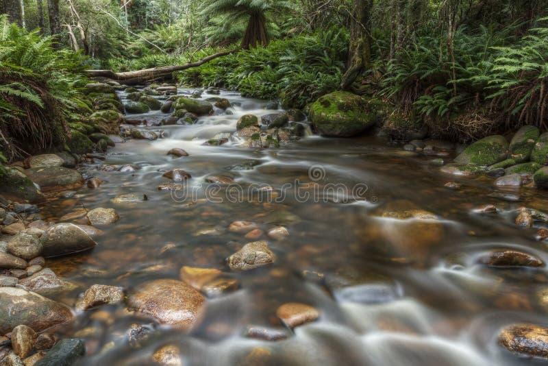 Brudgum River Blue Tier Tasmanien arkivfoto