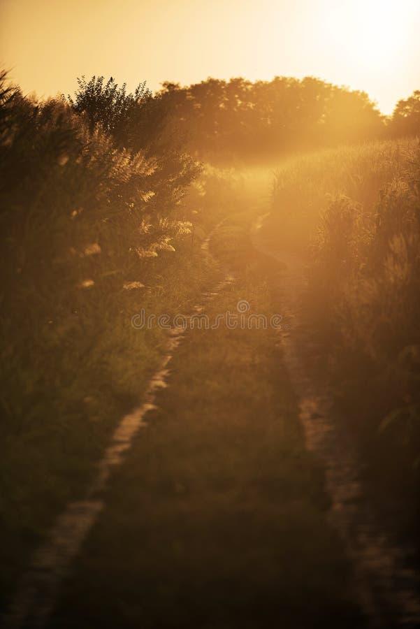 Brudne pola uliczne w zachodzie słońca obrazy royalty free