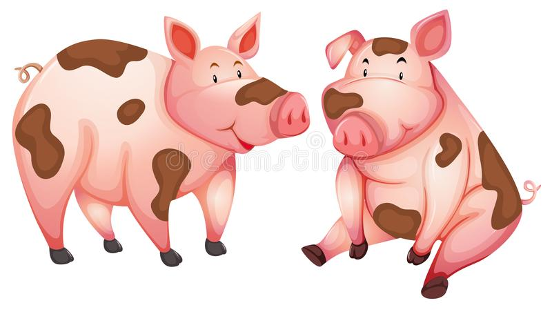 Brudny śliczny świnia bielu tło ilustracji