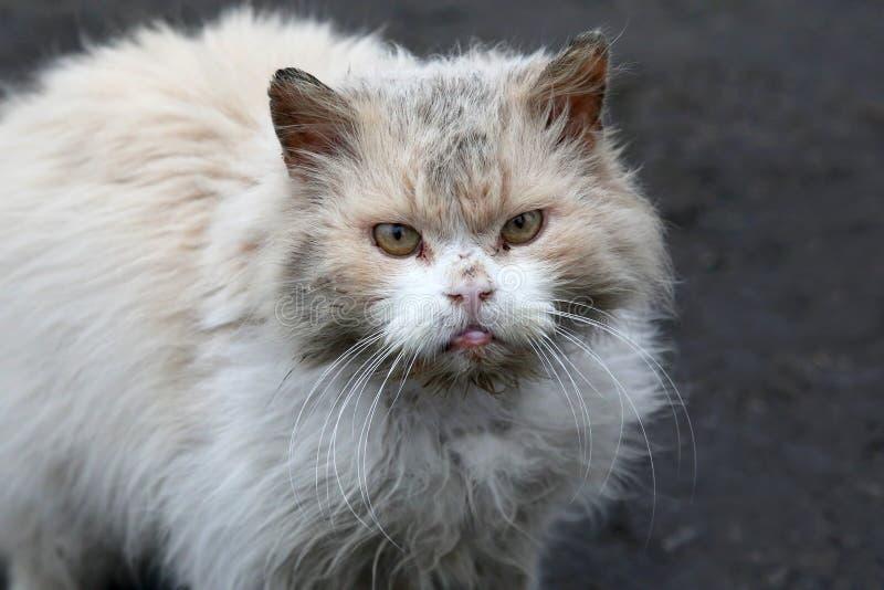 Brudny bezdomny kot z nieszczęśliwym spojrzeniem obrazy stock