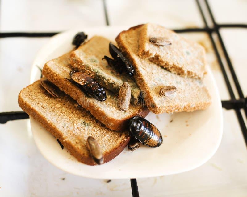 Brudny kuchnia stos brudni naczynia atakujący z płociami, stylu życia pojęcie obraz stock