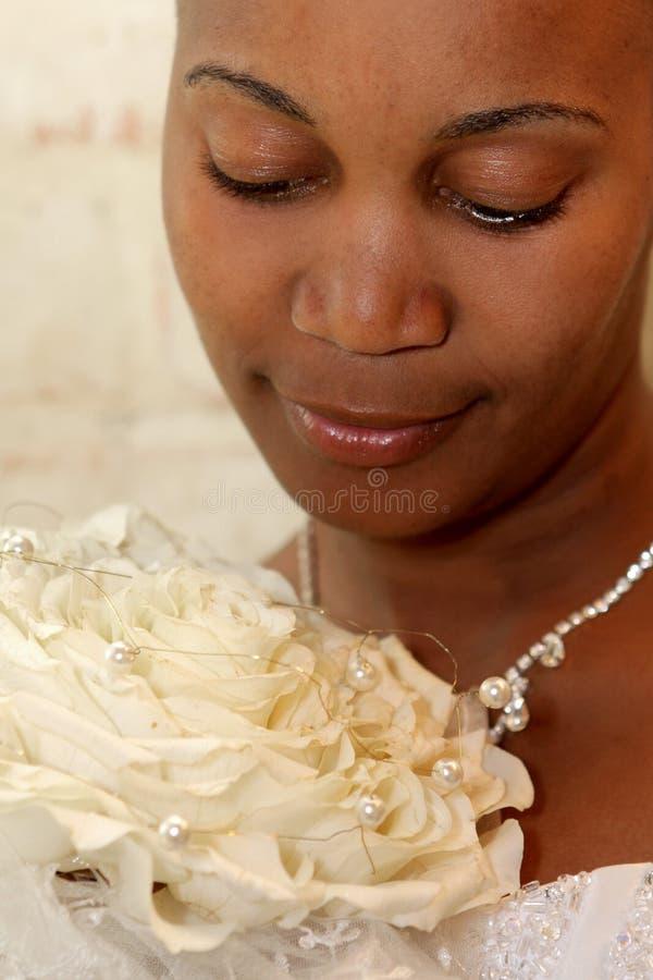 brudpetal royaltyfri foto