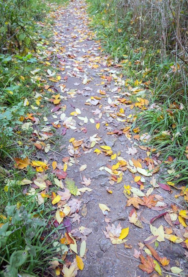 Brudu footpath śmiecący z jesień liśćmi obrazy stock