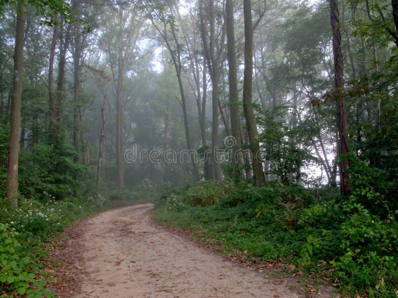 brudu lasowej ścieżki drewna obraz stock