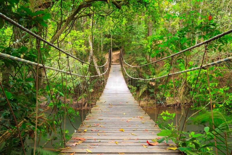 Brug aan de wildernis, Khao Yai, Thailand royalty-vrije stock afbeelding