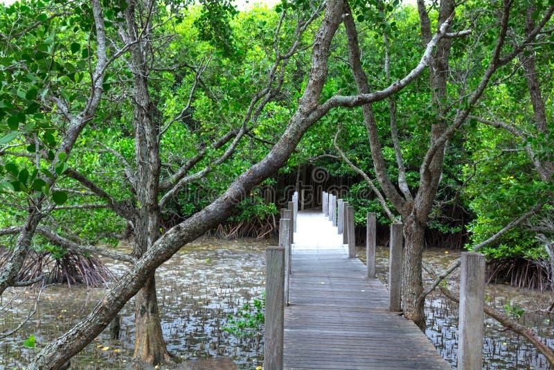 Brug op het bos van de Mangrove royalty-vrije stock afbeeldingen