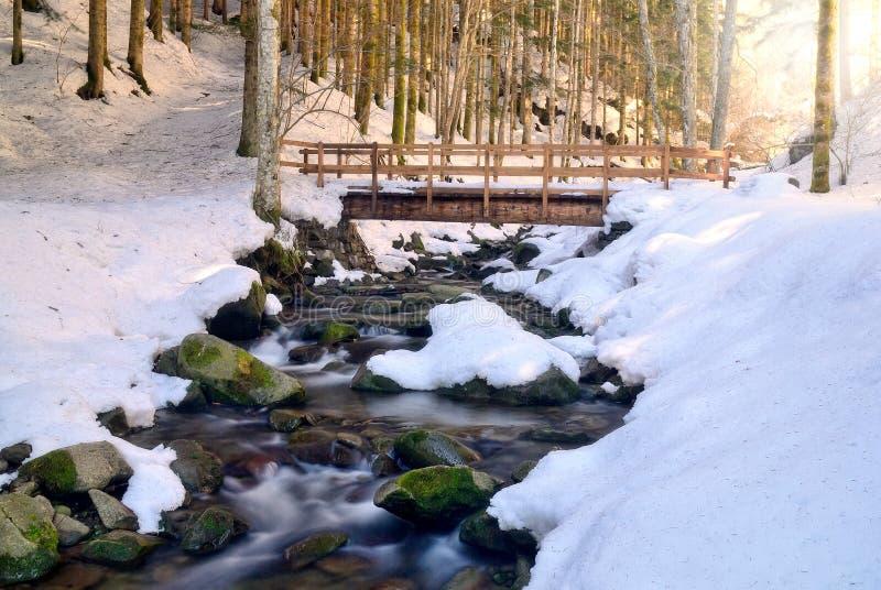 Brug over de stroom in het natuurreservaat stock foto's