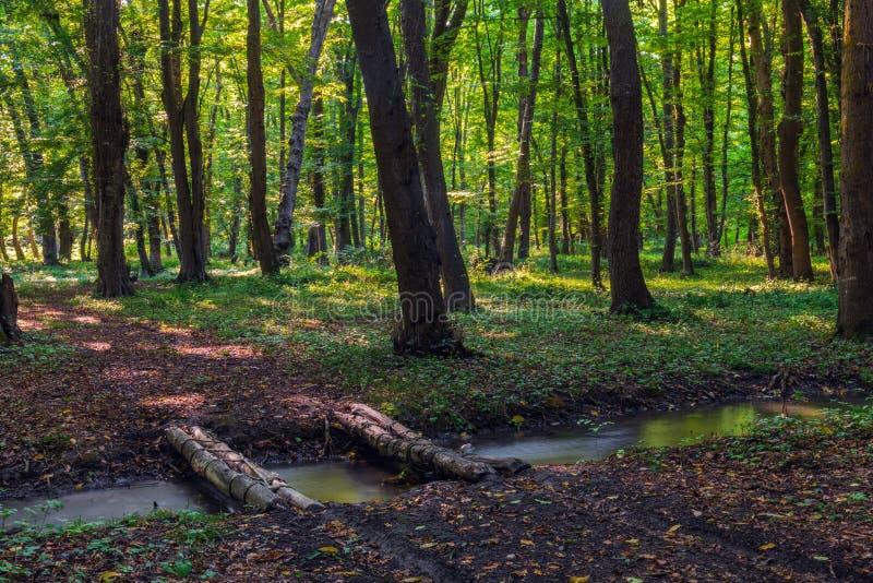 Brug over een beek in een groen de zomerbos stock foto