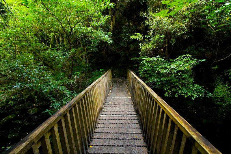 Brug van hout naar donkere en groene het meest forrest stock foto's