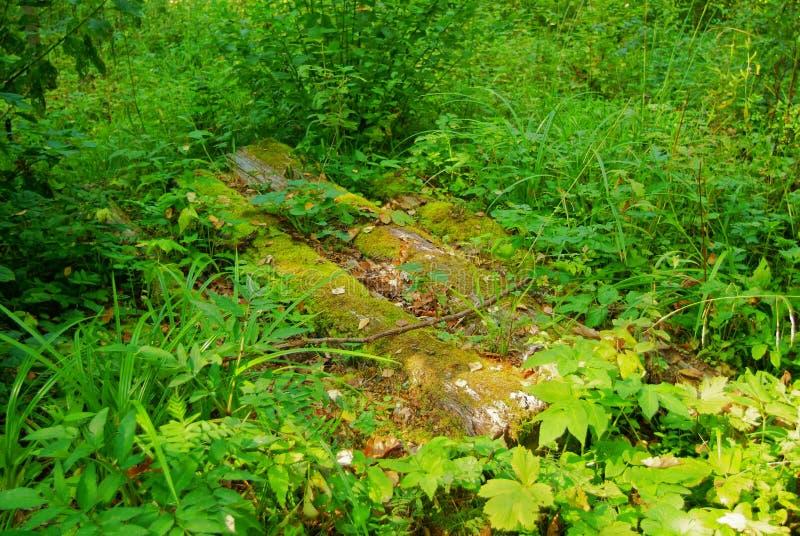Brug van oude logboeken over een stroom in het bos in de herfst royalty-vrije stock foto's
