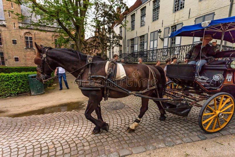 BRUGES, BELGIO - 10 GIUGNO 2014: Trasporto del cavallo sulla via di Bruges, Belgio immagine stock libera da diritti