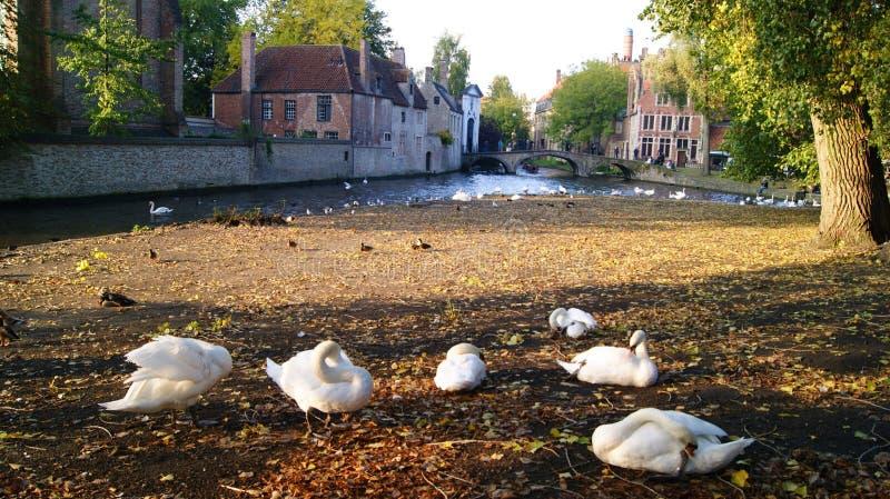 Brugge, België, beelden van de stad stock afbeelding