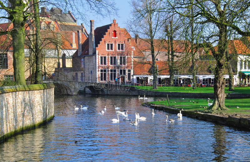 Brugge. Channel and swans in Brugge, Belgium stock images