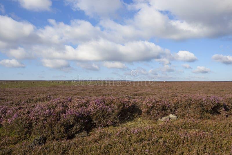 Brughiera esposta al vento immagini stock