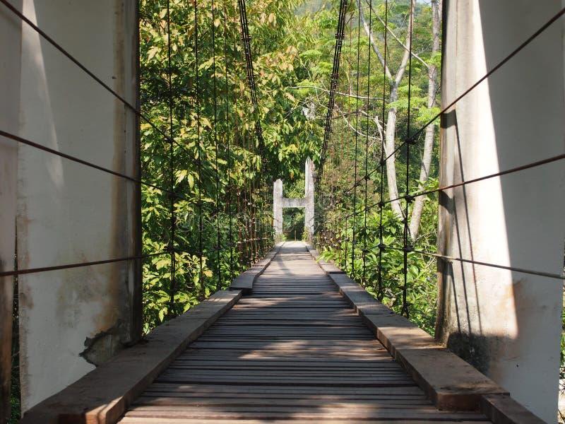 Brugmening over waterweg in tropisch bos stock afbeelding