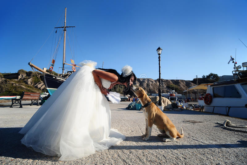 Bruid die een hond op een haven Santorini kust royalty-vrije stock afbeelding