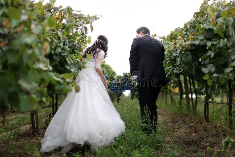 Bruid en bruidegom in de wijnstokken royalty-vrije stock foto's