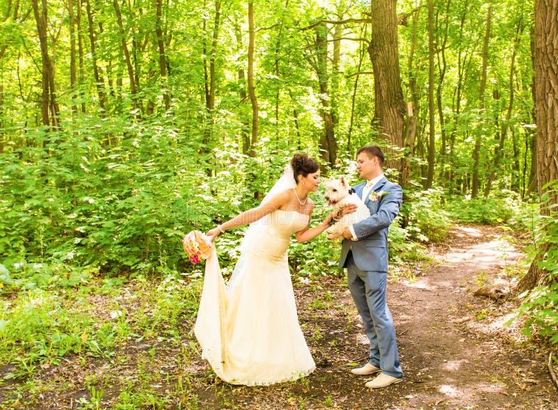 Bruid en bruidegom die met het hoogland van het hondwesten lopen stock fotografie