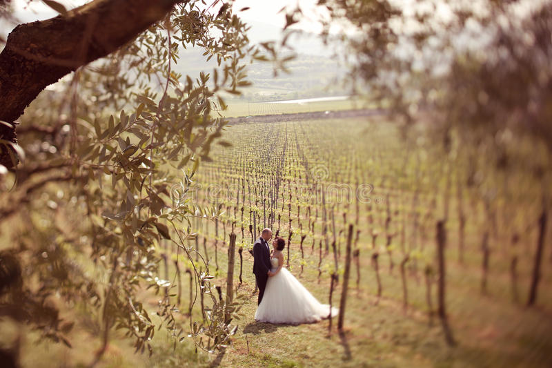 Bruid en bruidegom in een wijngaard stock foto's