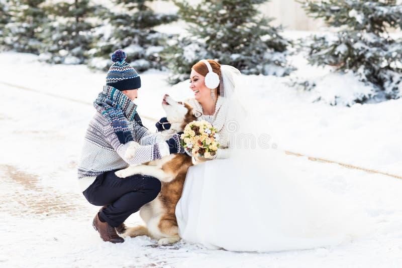 Bruid en bruidegom met hond Huskies in de winter royalty-vrije stock fotografie