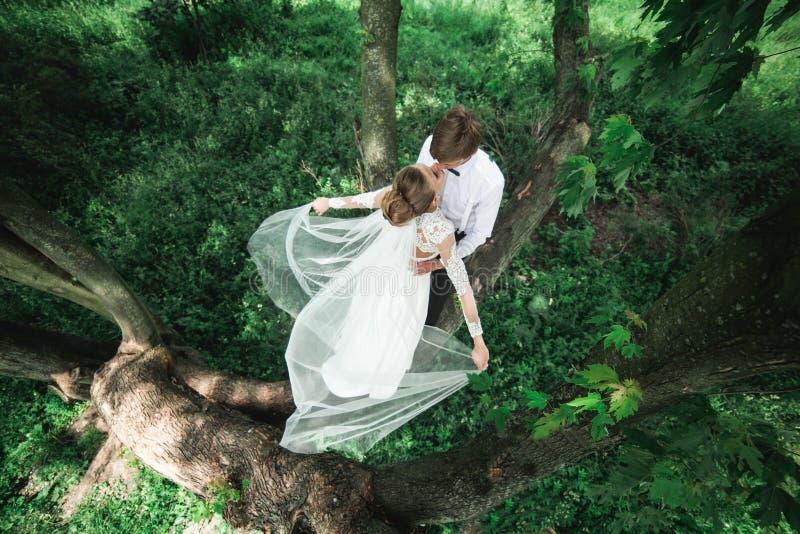 Bruid en bruidegom op de boom stock afbeeldingen
