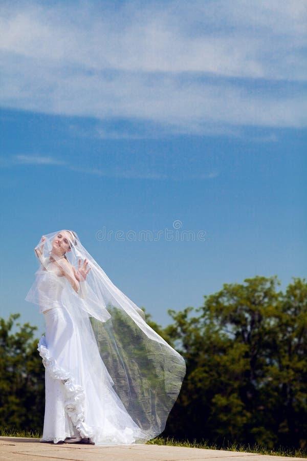 Bruid en sluier stock foto
