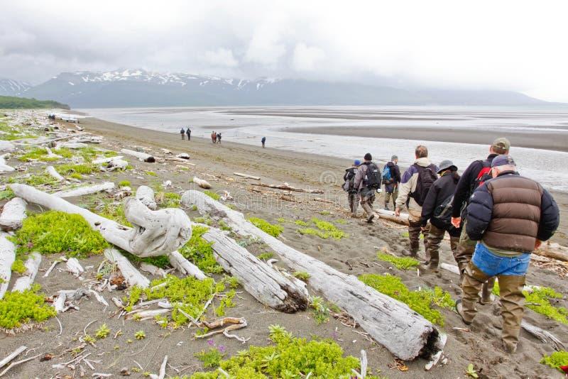Bruin Alaska draagt het Bekijken de Baai van Hallo van de Groep stock afbeelding