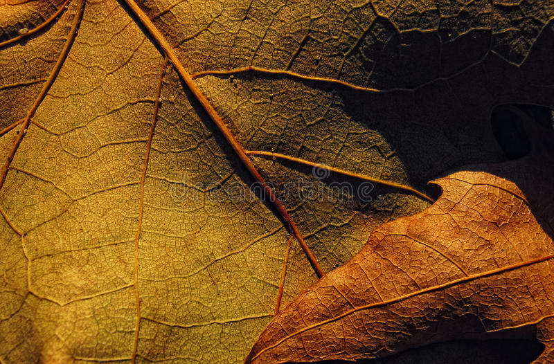 Bruin blad stock fotografie