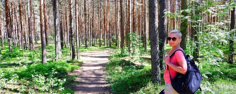 Bruin de pijnboomboom Jonge Cora Mening van lange oude bomen in de altijdgroene oerwoud blauwe hemel op de achtergrond stock foto's