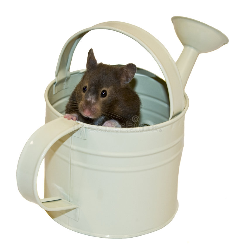 Bruin draag Hamster & Gieter stock afbeelding