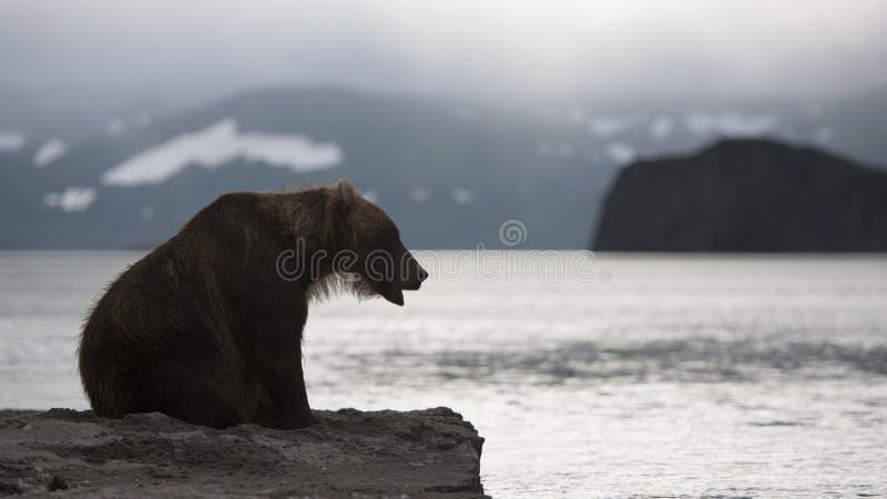 Bruin draag zit op de kust van meer stock afbeeldingen