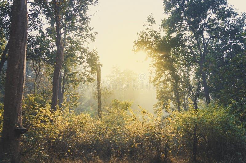 Bruin en geel grasgebied met struiken bij bosheuvelsachtergrond in de hemellicht van de de lente duidelijk dag royalty-vrije stock fotografie
