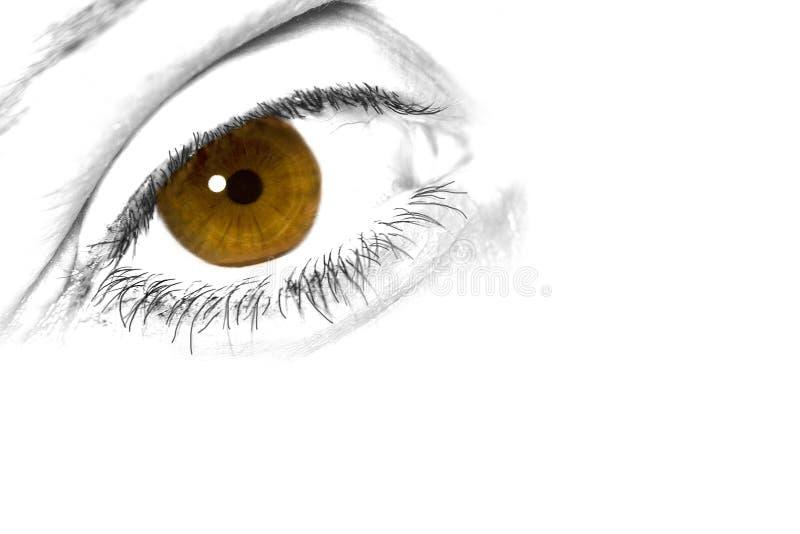 Bruin en geel oog royalty-vrije stock foto