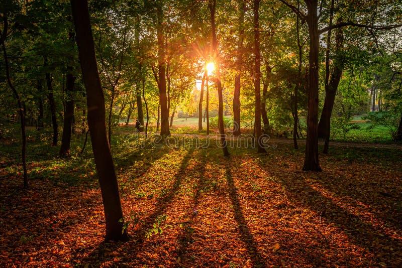 Bruin en prachtig bos in de herfst in Polen stock afbeeldingen