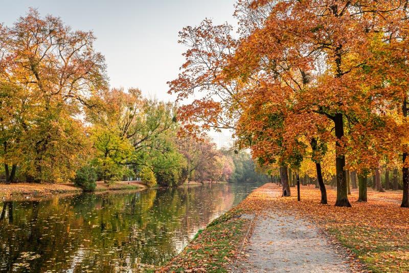 Bruin en prachtig de herfstbos in Europa royalty-vrije stock afbeeldingen