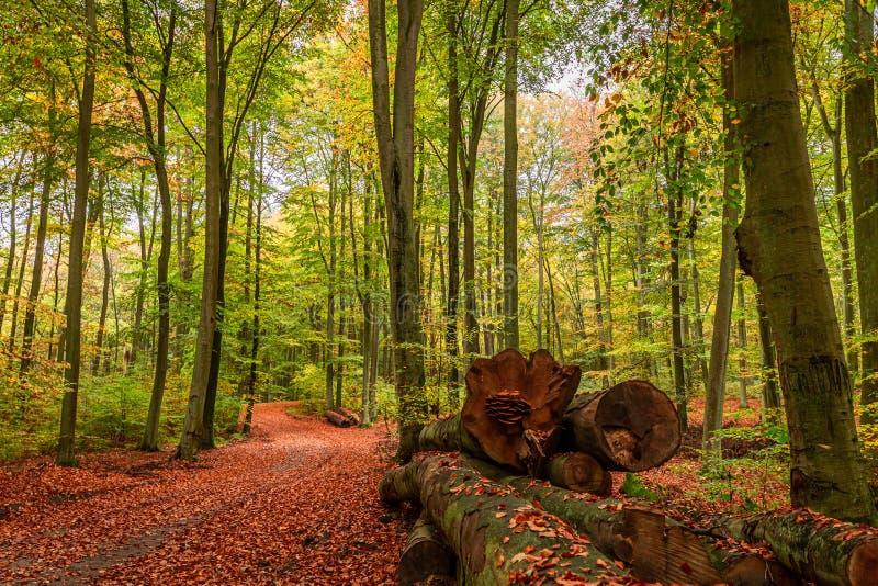 Bruin en prachtig de herfstbos in Polen stock afbeeldingen