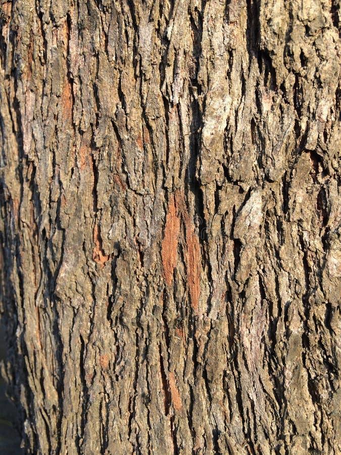 Bruin houten texturendetail stock foto's