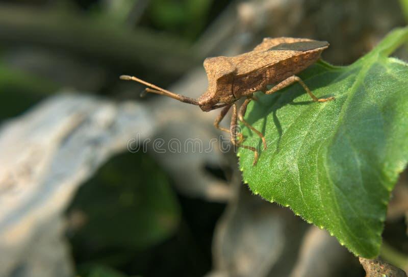 Bruin insect op groene bladsprongen aan waterval stock foto