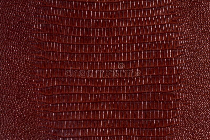 Bruin krokodille glanzend natuurlijk leer op macro, textuur royalty-vrije stock foto