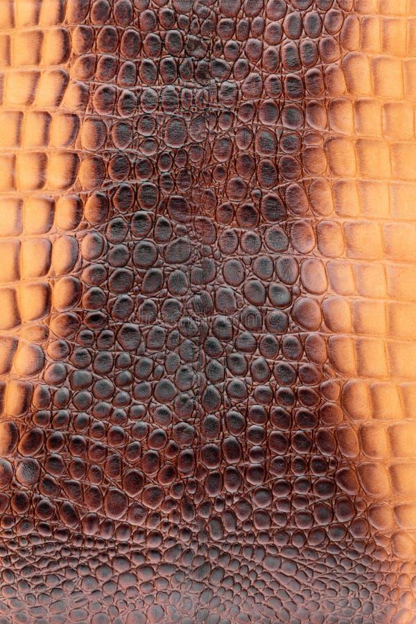 Bruin krokodilleer, als achtergrond stock foto's