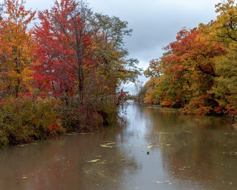 Bruin Muddy River stock afbeelding