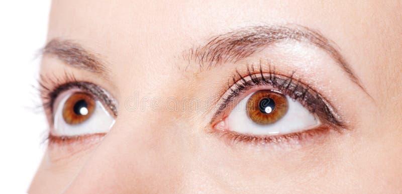 Bruin ogenclose-up stock afbeeldingen