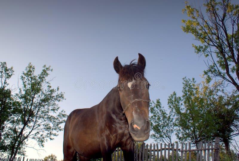 Bruin paard bij een landbouwbedrijf stock foto