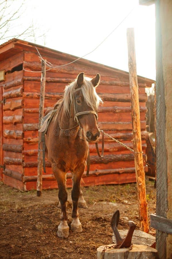 Bruin paard dichtbij een smidswerkruimte royalty-vrije stock foto's