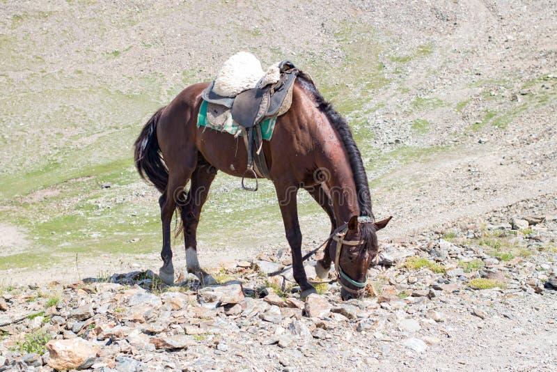 Bruin paard die gras op de rotsen eten stock foto